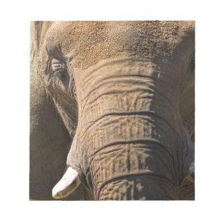 Elephant Closeup Memo Pad