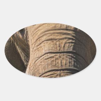 Elephant Closeup Oval Sticker