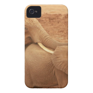 elephant custom personalize diy Anniversaries iPhone 4 Covers
