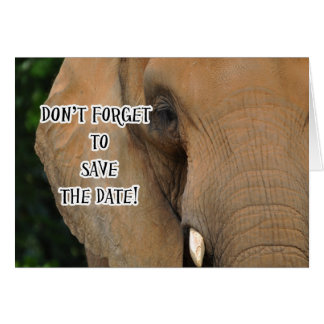 Elephant, Don't Forget to Save the Date Invitation