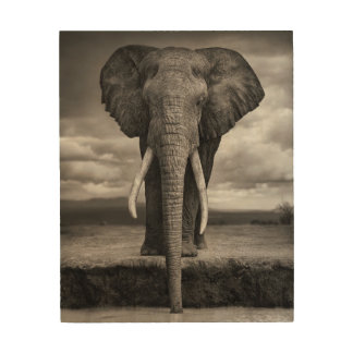 Elephant drinking at watering hole wood print