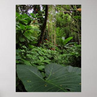 Elephant Ear in Rainforest Poster