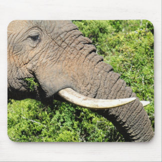 Elephant eating grass macro shot mouse pad