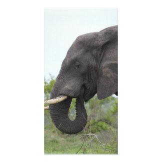Elephant Eating Photo Cards