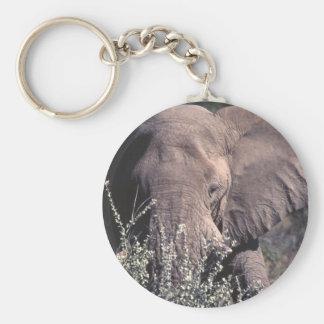 Elephant - Etosha National Park, Namibia Keychain