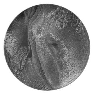 Elephant Eye Plate