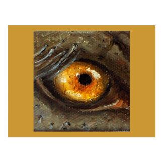 Elephant Eye Postcard