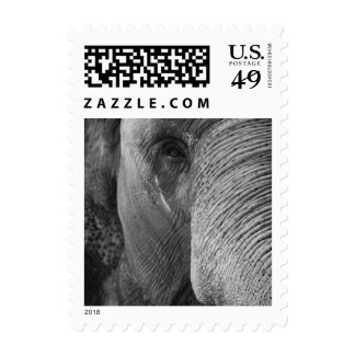 Elephant Face Stamp