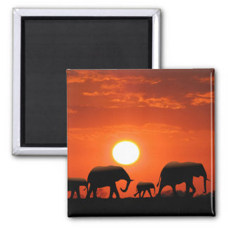Elephant family 2 inch square magnet