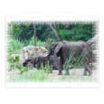 elephant-family-2 postal