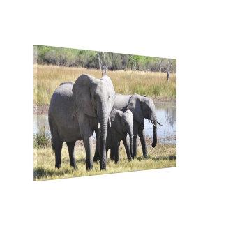 Elephant family canvas prints