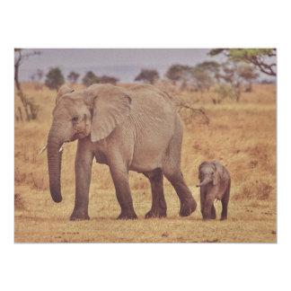 Elephant family announcements