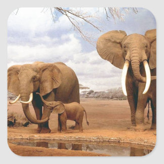Elephant Family Square Sticker