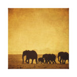 Elephant Family Stretched Canvas Prints