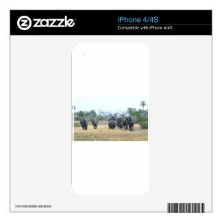 Elephant Family Tom Wurl.jpg Skin For iPhone 4