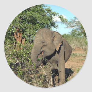 Elephant feeding Uda Walawe National park Classic Round Sticker