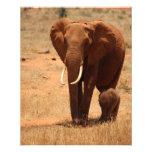 Elephant Flyer Design