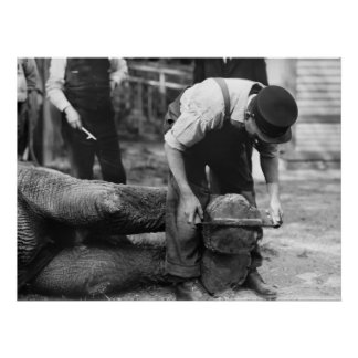 Elephant Foot Work, 1910s Poster