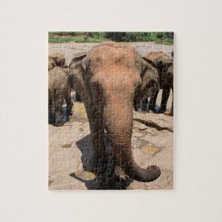 Elephant group portrait, Sri lanka Jigsaw Puzzle
