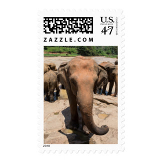 Elephant group portrait, Sri lanka Postage