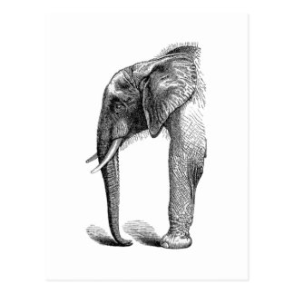 Elephant Head in Profile Drawing Postcard