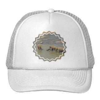 Elephant Herd  Baseball Hat
