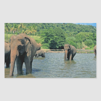 Elephant herd bathing in river rectangular sticker