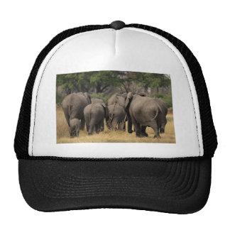 Elephant Herd Trucker Hat