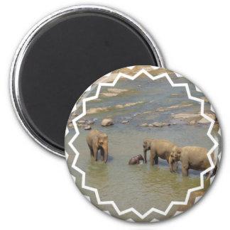 Elephant Herd  Magnet Refrigerator Magnet