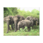 Elephant Herd Stretched Canvas Prints