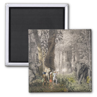 Elephant hunt in the region of Logalla, from 'Trav 2 Inch Square Magnet