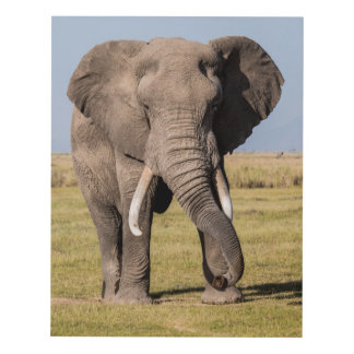 Elephant in an Aggressive Pose Panel Wall Art