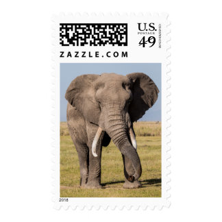 Elephant in an Aggressive Pose Postage