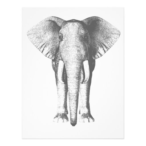 Elephant in Black and White Flyer
