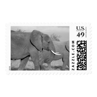 Elephant in black and white postage