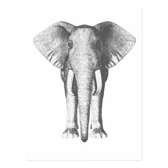 Elephant in Black and White Postcard