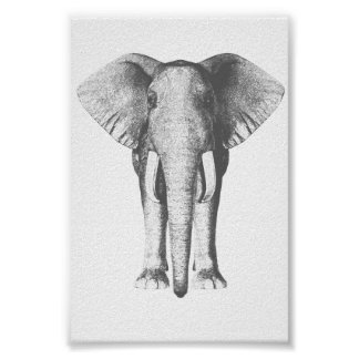 Elephant in Black and White Poster
