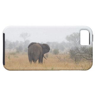Elephant in early morning fog, Kruger National iPhone SE/5/5s Case
