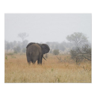 Elephant in early morning fog, Kruger National Posters