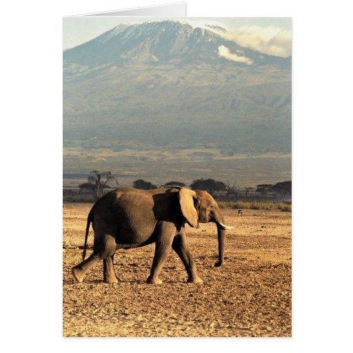 Elephant in front of Kilimanjaro Greeting Card