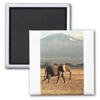 Elephant in front of Kilimanjaro Magnet