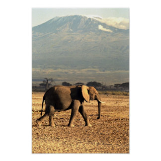 Elephant in front of Kilimanjaro Poster