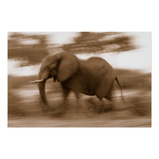 Elephant in motion Sepia Africa Poster