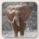 Elephant in Namibia Drink Coaster