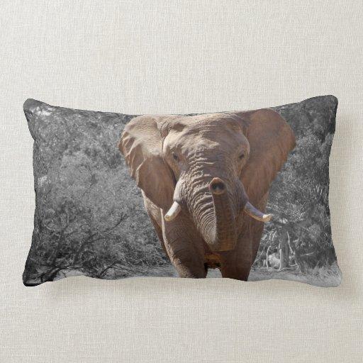 Elephant in Namibia Pillows