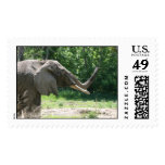 Elephant in the park postage