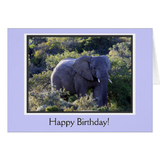 Elephant in Trees Happy Birthday Card