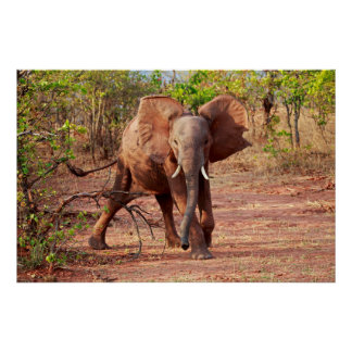 Elephant in Warning Pose Poster