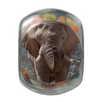 Elephant Jelly Belly Candy Jars