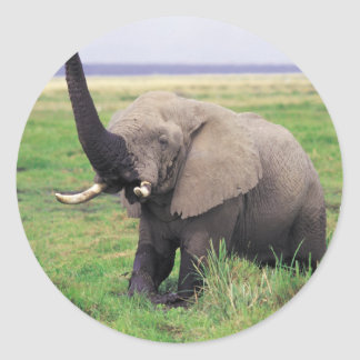 Elephant love classic round sticker